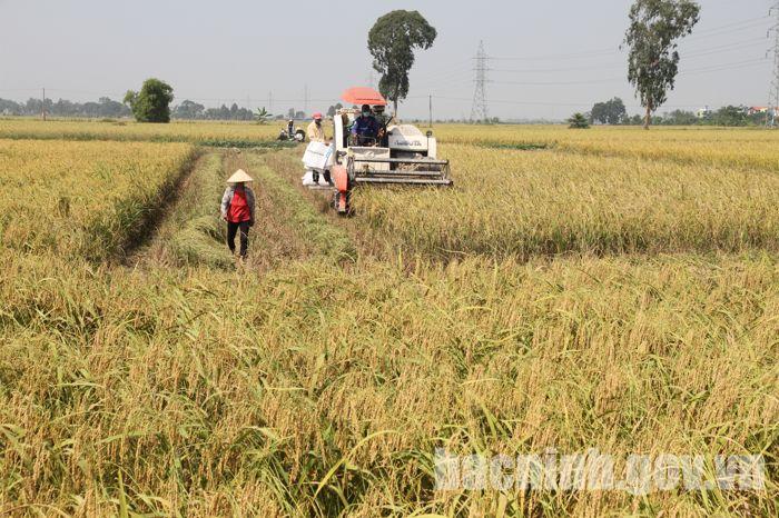 Quy định giá thóc thu thuế sử dụng đất nông nghiệp năm 2019